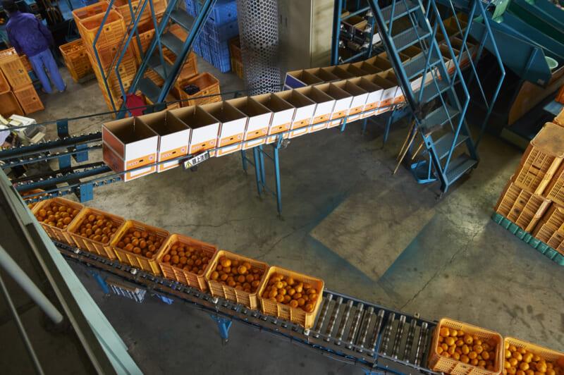 食品工場で広く使われている結束バンド